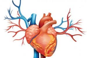 5-partes-del-cuerpo-que-los-cientIficos-pueden-hacer-crecer-en-un-laboratorio-05