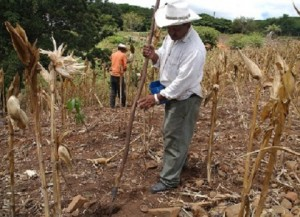 Al igual que el sur de Honduras, El Salvador sufre de sequía.