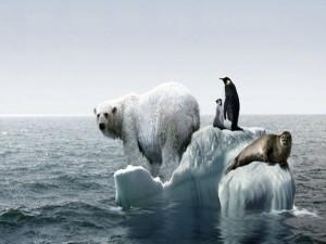 Cambio Climatico4