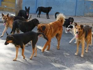 La nueva ley también habla de protección a los perros de la calle.