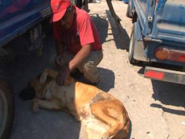 ¡Insolito! Perra  amamantó un niño durante dos años en un taller mecánico en Chile