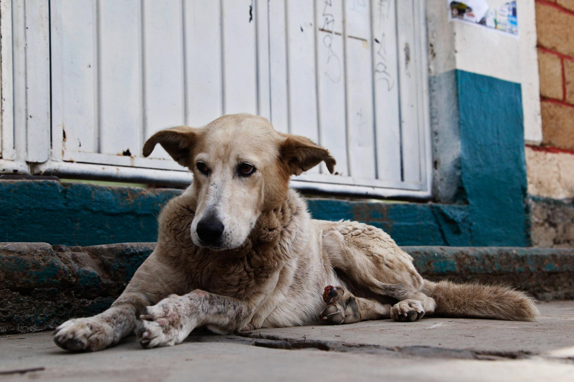 ¡Insólito! Congreso Nacional de Honduras, legisla sobre control natal de perros y gatos
