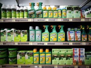 Syngenta Monsanto