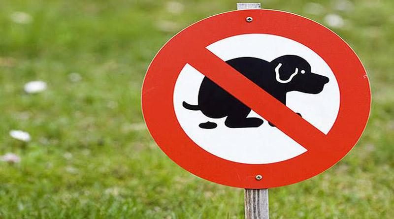 animales, civilizado