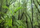 Convenios internacionales para proteger el ambiente suscritos por Honduras: