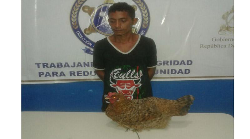 Por robarse una gallina meten preso a hombre en Choluteca, Honduras