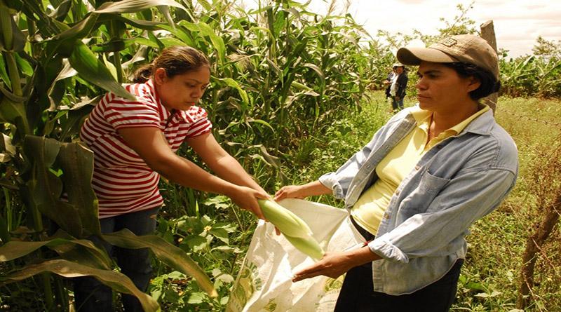 Campesinas en Honduras son perseguidas, criminalizadas y judicializadas por un pedazo de tierra