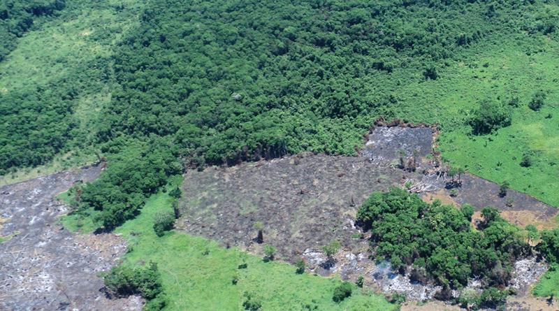 La tragedia mortal de Omoa tiene nombre: deforestación