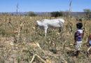 Prevenir hoy la próxima crisis alimentaria