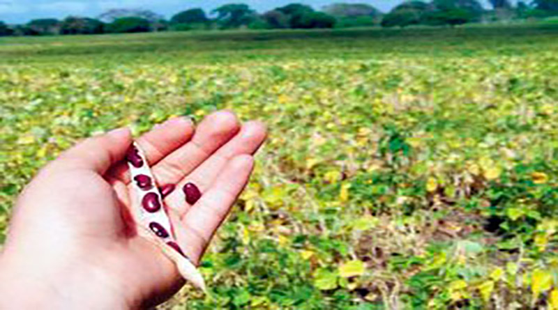 "Fondos FIRSA para productores se llaman fondos ""farsa"": Productores de granos"