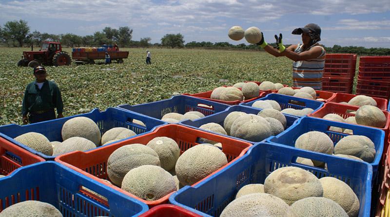 Meloneras del sur