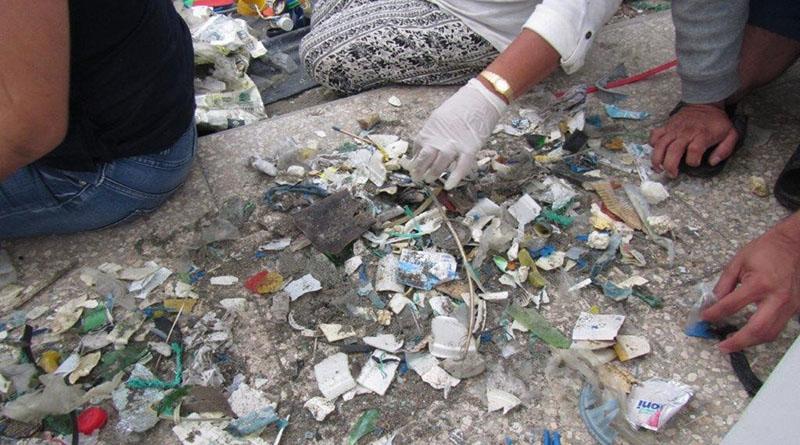 desechos plásticos marinos