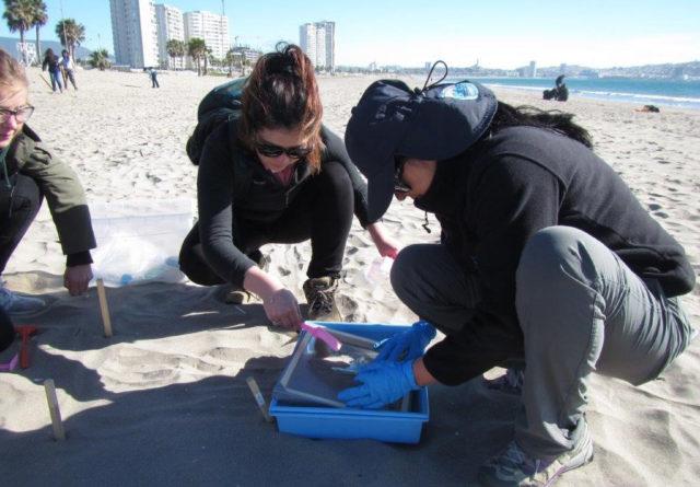 desechos plásticos marin