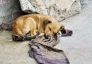 Dona 5 lempiras al mes para una mascota rescatada