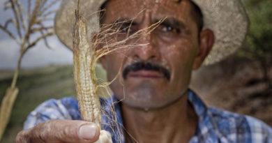 El clima se llevó sus cosechas, y ahora pasan hambre