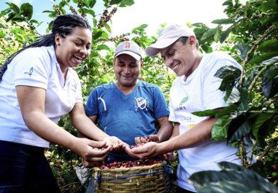 Investigan nuevas variedades de café en Nicaragua y Honduras