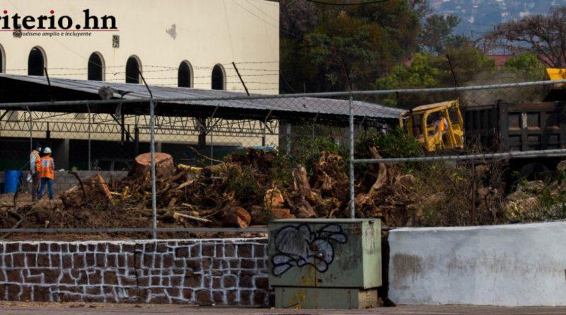 Alcalde capitalino aprovecha cuarentena para cortar árboles