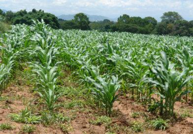 La pandemia debe transformar la agricultura global