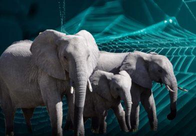 Elefantes sobre una telaraña