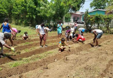 Niñas y niños de Corozal aprenden a hacer huerto comunitario para vencer la inseguridad alimentaria