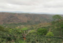 Denuncian a fiscal del ambiente de Siguatepeque por tala de bosque en reserva biológica de Montecillos