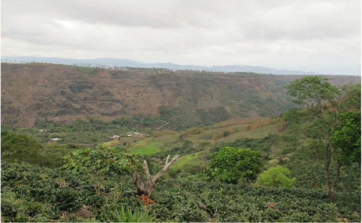 reserva biológica de Montecillos