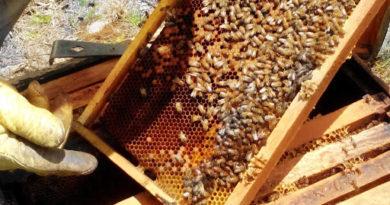 Destruyen apiario de mujeres lencas en el occidente de Honduras