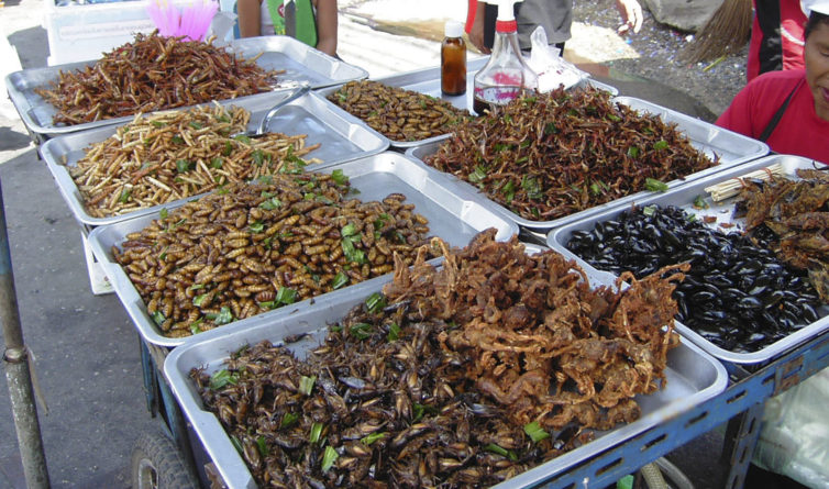 Insectos, un recurso alimenticio